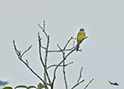 Bird along the Rio Negro River Brazil
